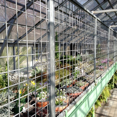 Looking down the length of the Alpine House