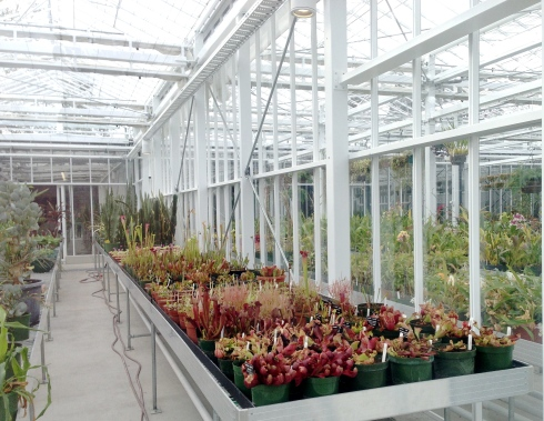Carnivorous plants in one of the glass houses