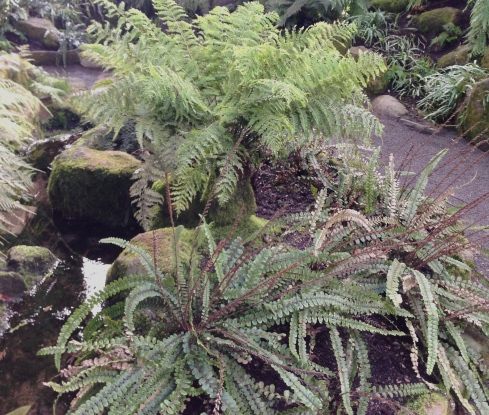 Inside the Fernery