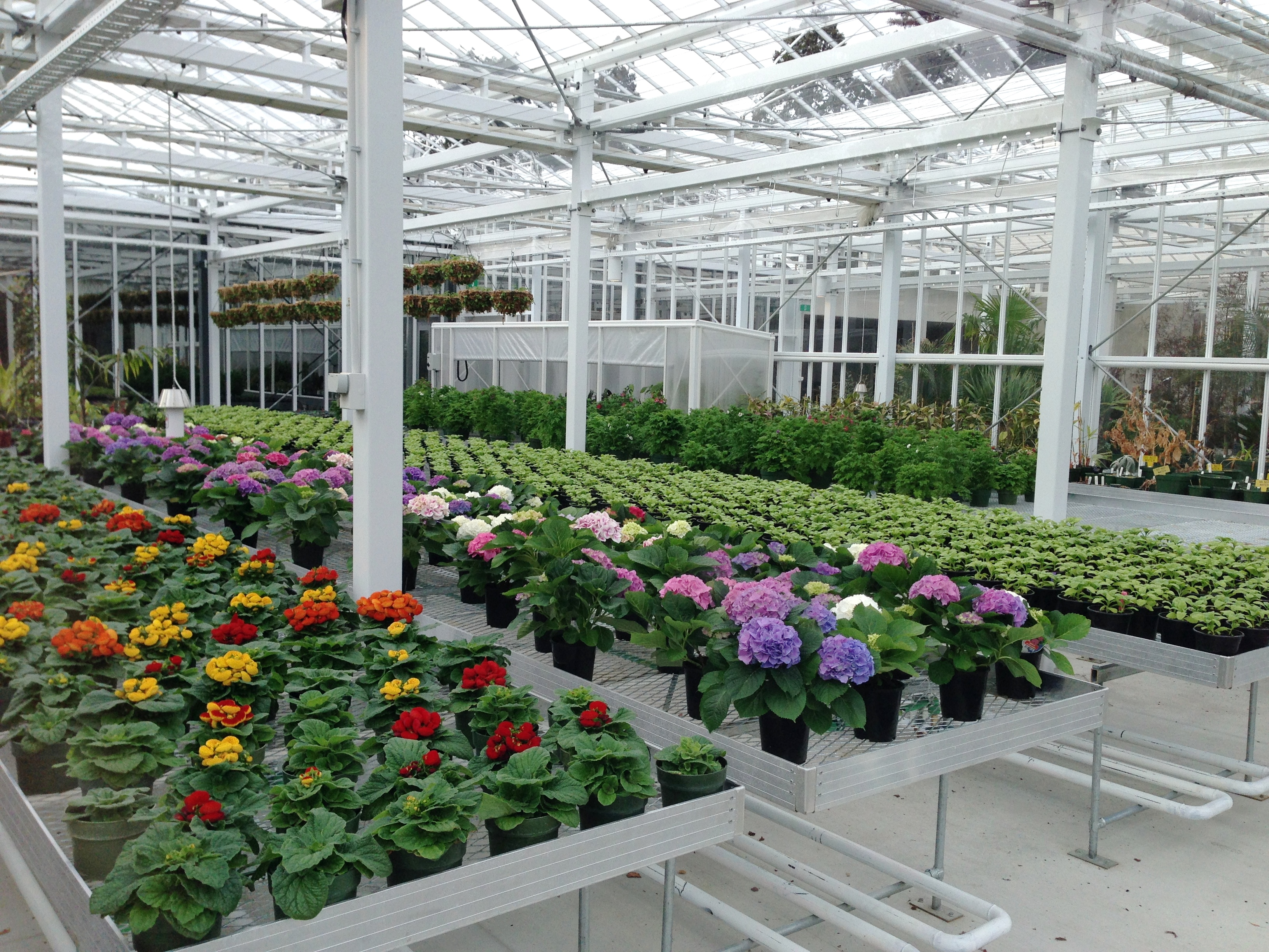 Propagation in one of the glass houses